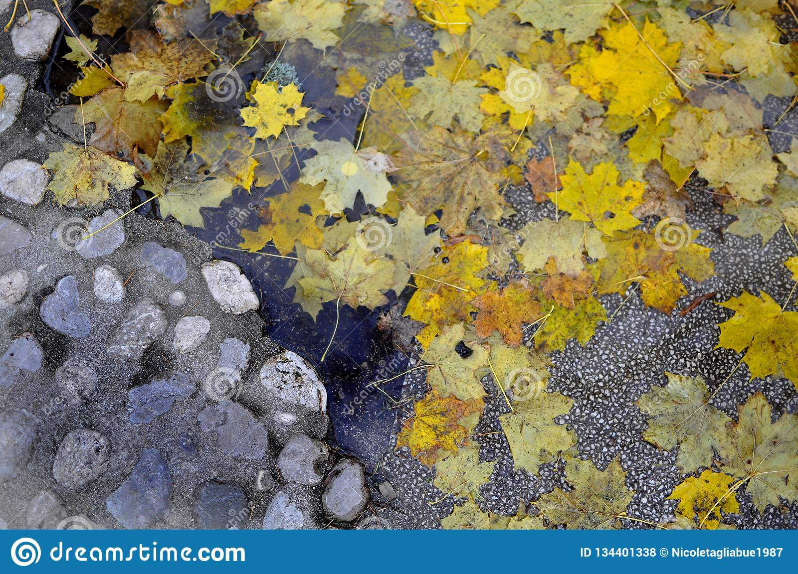 Old cobblestone street with autumn yellow leaves and muddy puddle - background autumn fall humid concept - life-soft/ death-hard