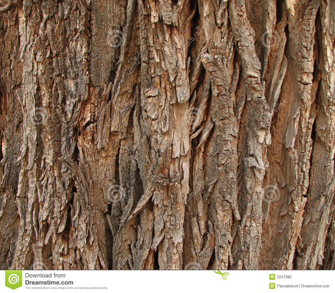Old cottonwood bark stock photography image 2247082 for Cottonwood designs
