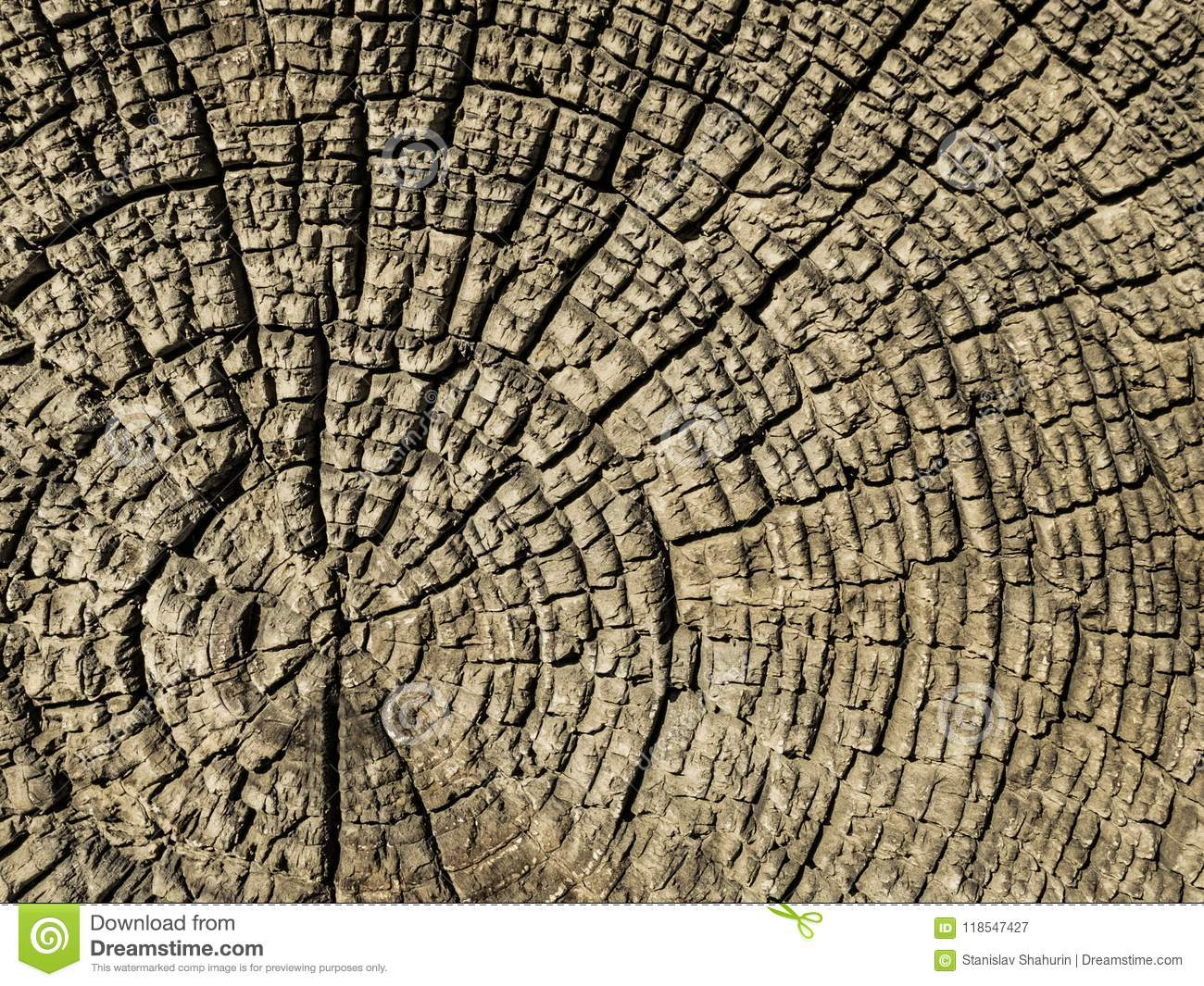 Old cross-section of a tree.
