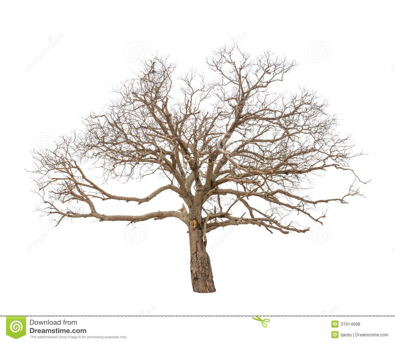 Old And Dead Tree Royalty Free Stock Photos - Image: 31914998