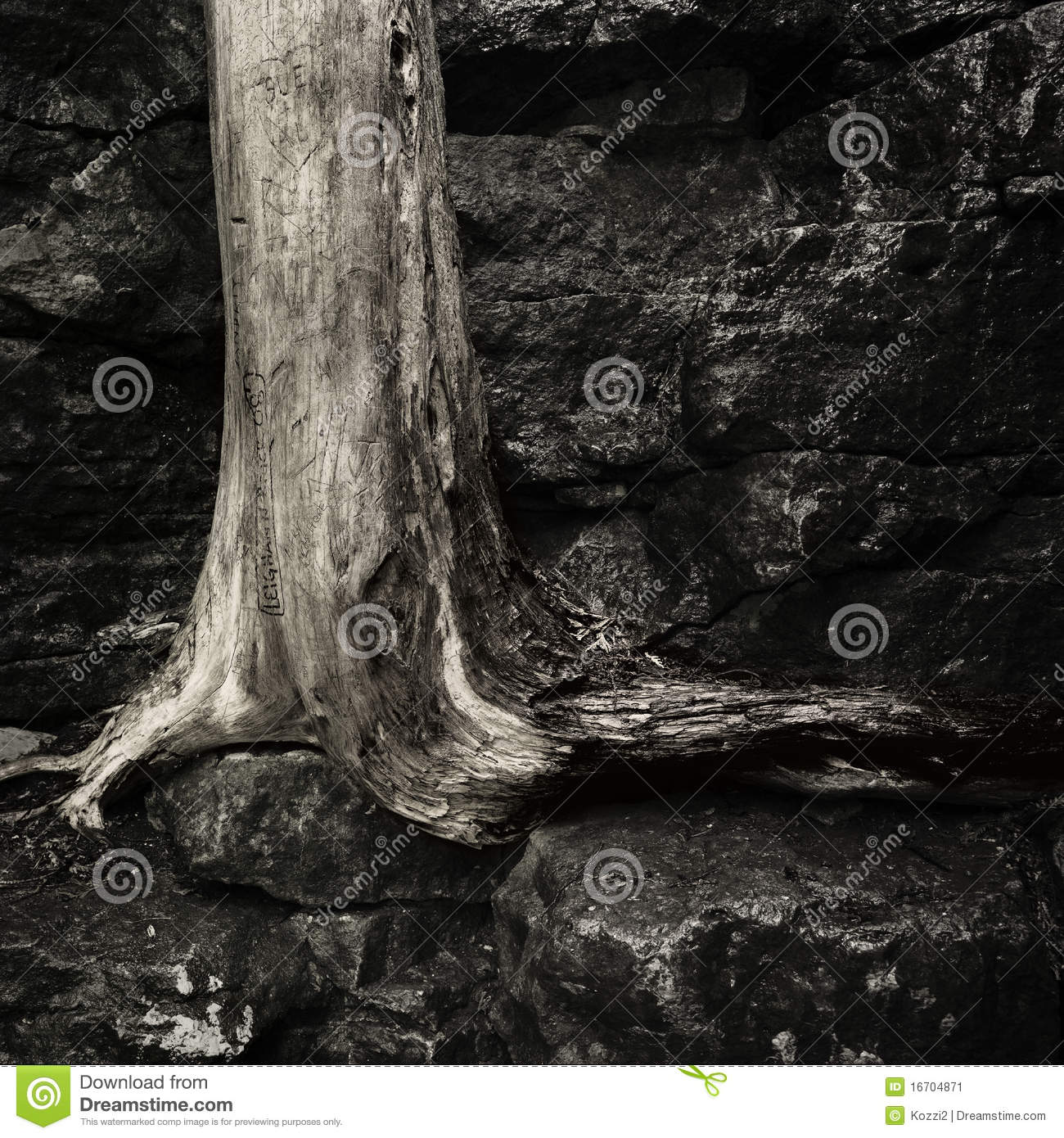 Old Dead Tree Trunk Stock Image Image 16704871