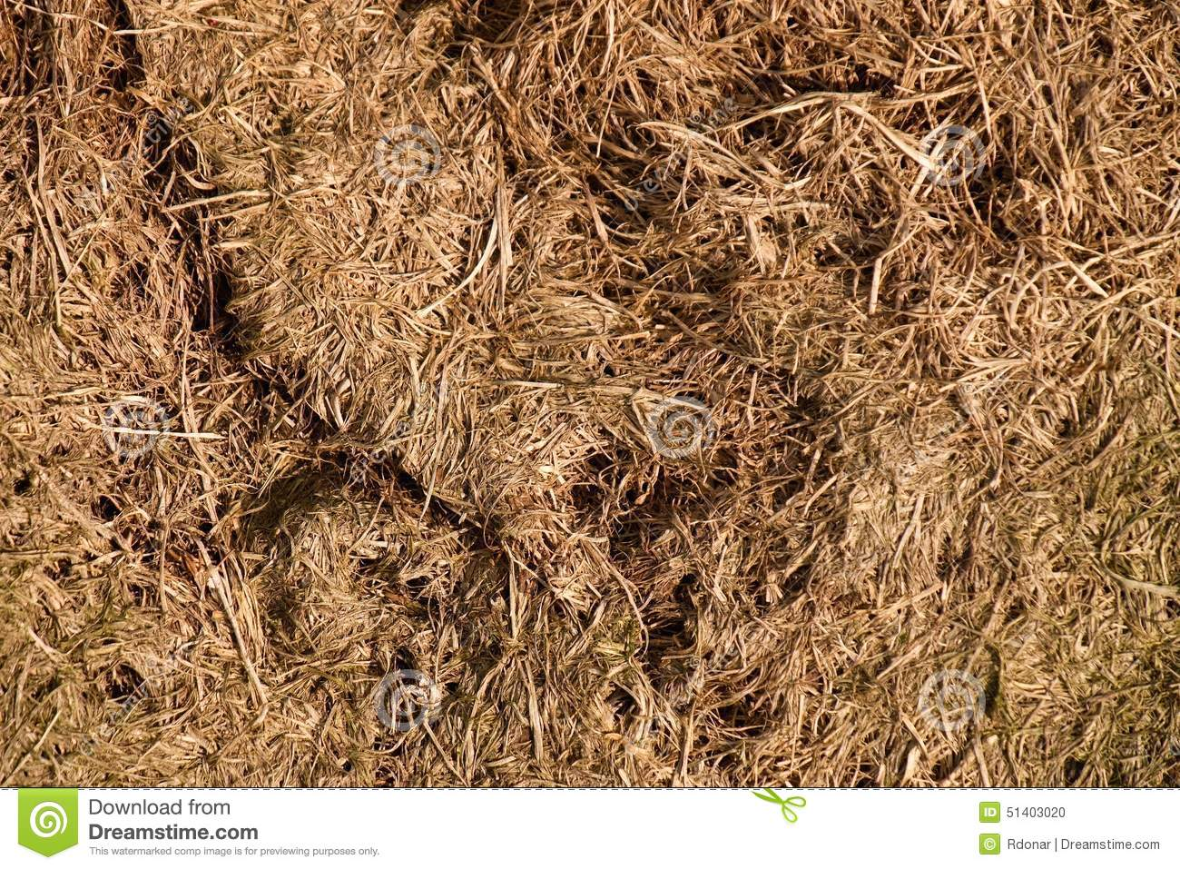 Old Decay Harvested Grass In Big Green Smell Mound In Corner Of ...