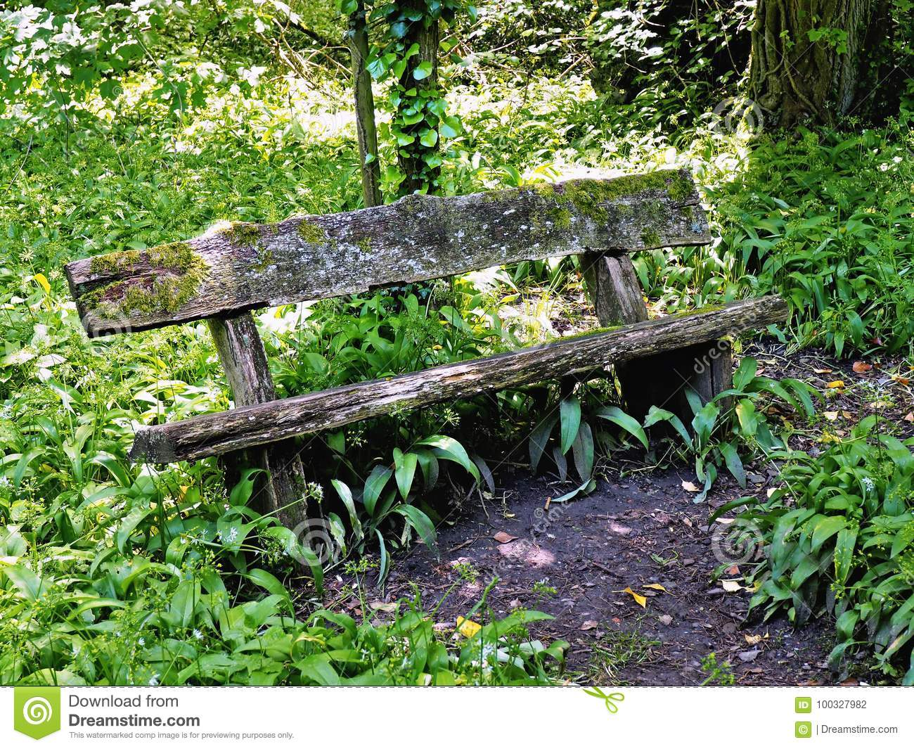 Miraculous Old Decayed Wooden Bench Surrounded With Plants Stock Photo Gmtry Best Dining Table And Chair Ideas Images Gmtryco