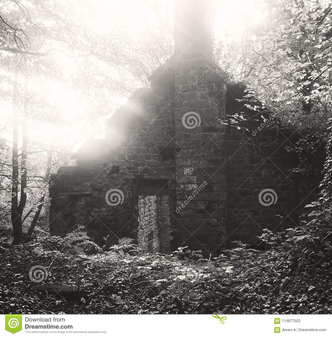An old derelict mill building in the woods