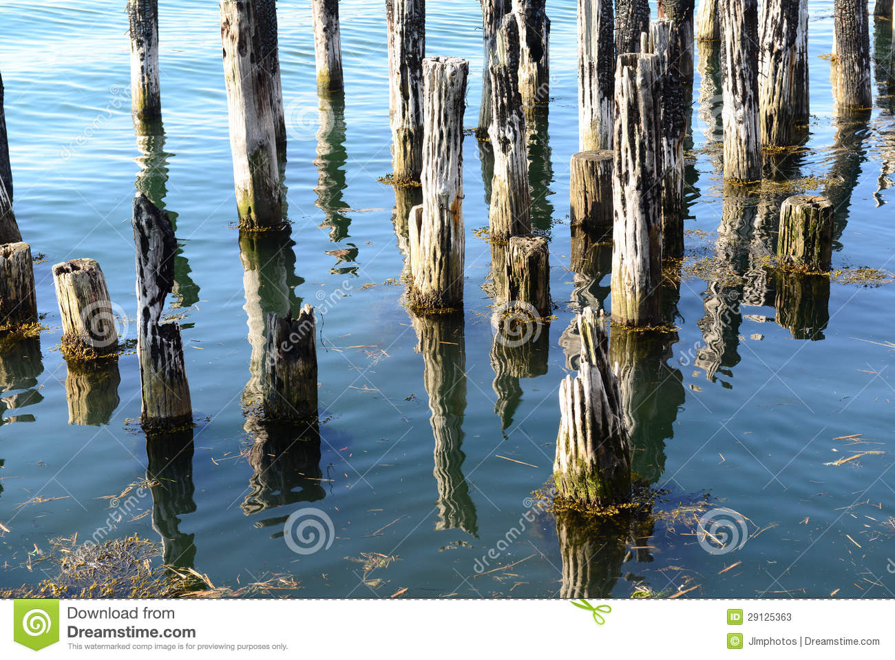 Old dock pilings in calm ocean waters stock photos image for Dock pilings cost