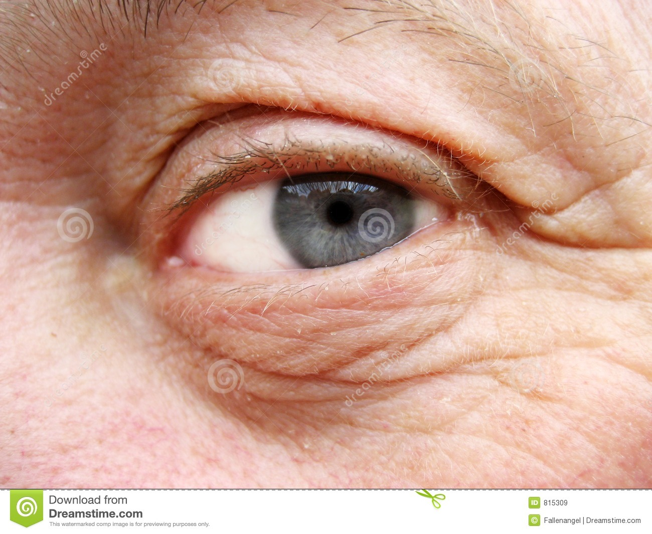 old eye royalty free stock images image 815309