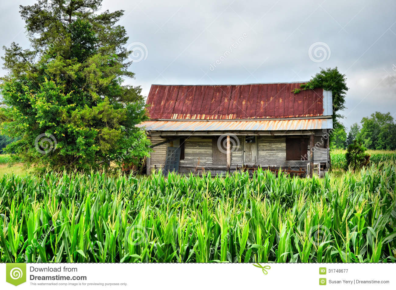 old farm house sitting in corn field royalty free stock photography image 31748677. Black Bedroom Furniture Sets. Home Design Ideas