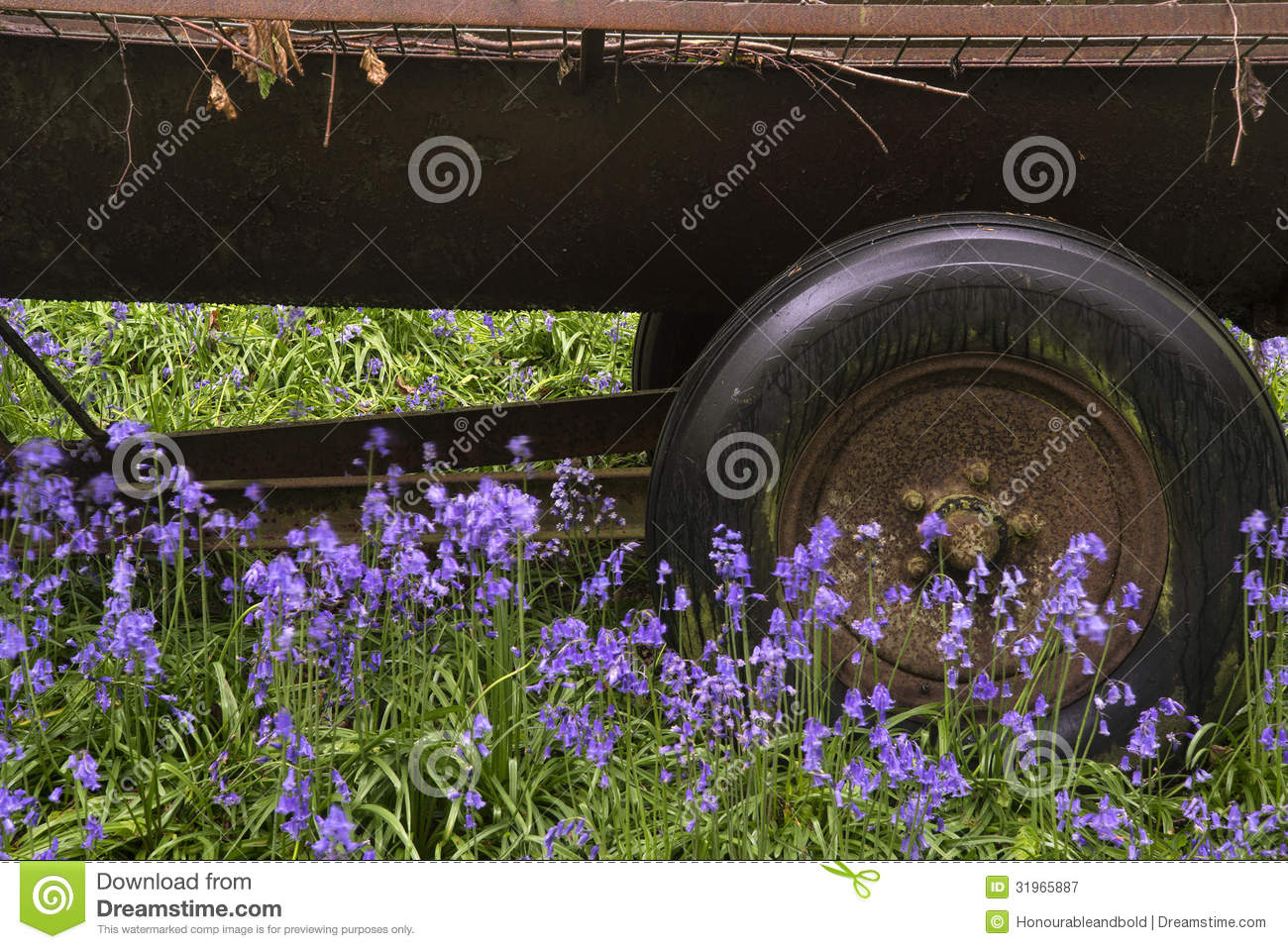 Download Old Farm Machinery In Vibrant Bluebell Forest Stock Image - Image of blue, colorful: 31965887