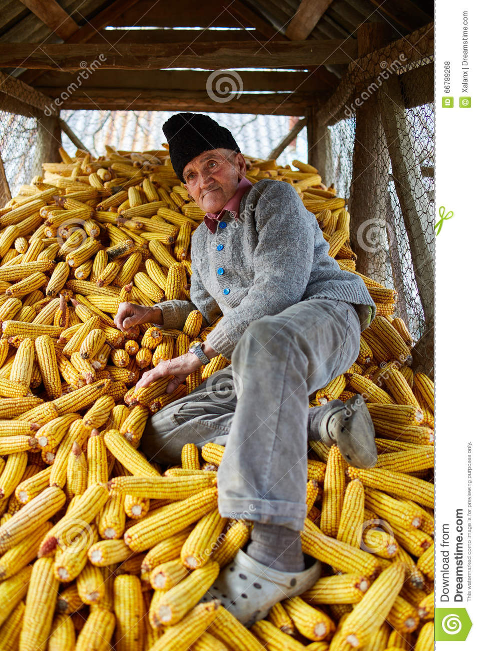 Old Farmer In His Maize Barn Stock Photo - Image of fall