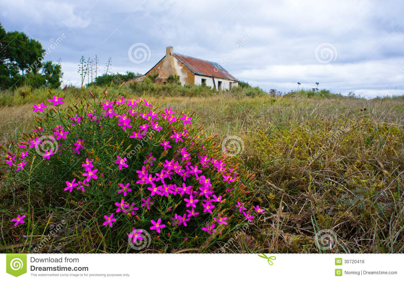 Old Farmhouse With Pink Flowers Royalty Free Stock Image Image