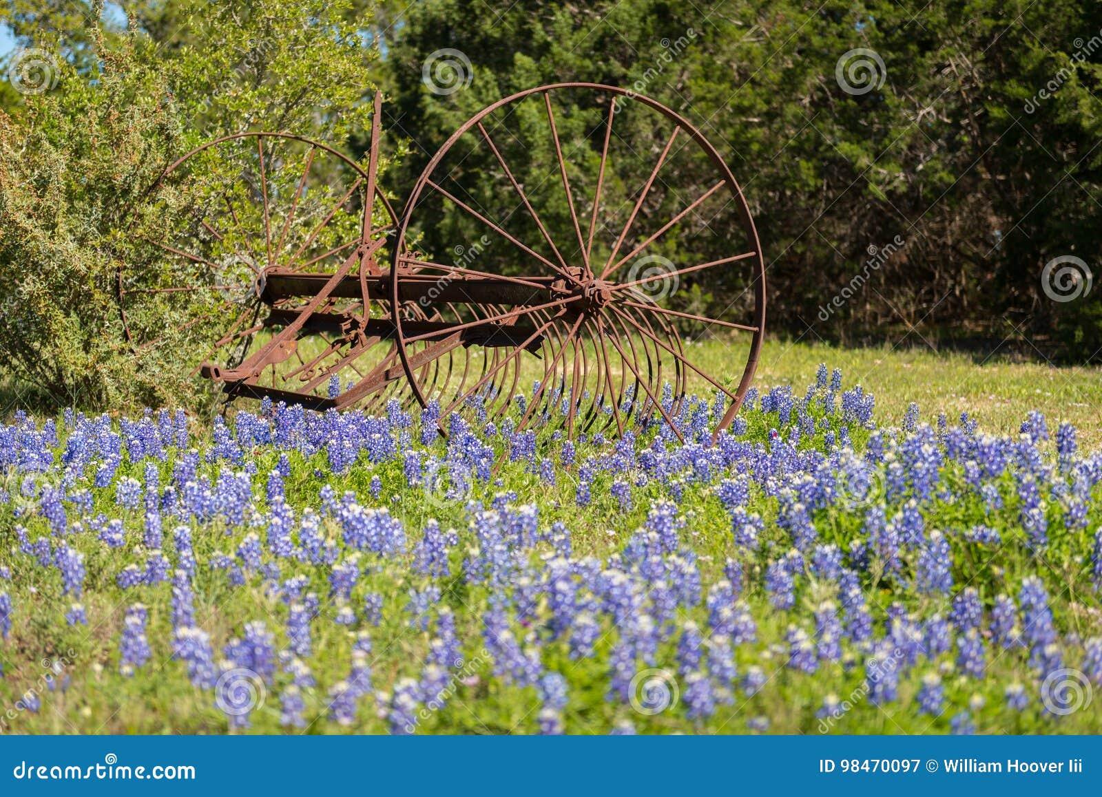 Old Farming Tool in Bluebonnet flowers