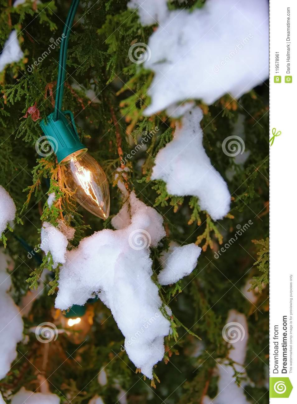 Nostalgia, Old Fashioned Christmas Lights On An Outdoor Tree, With ...