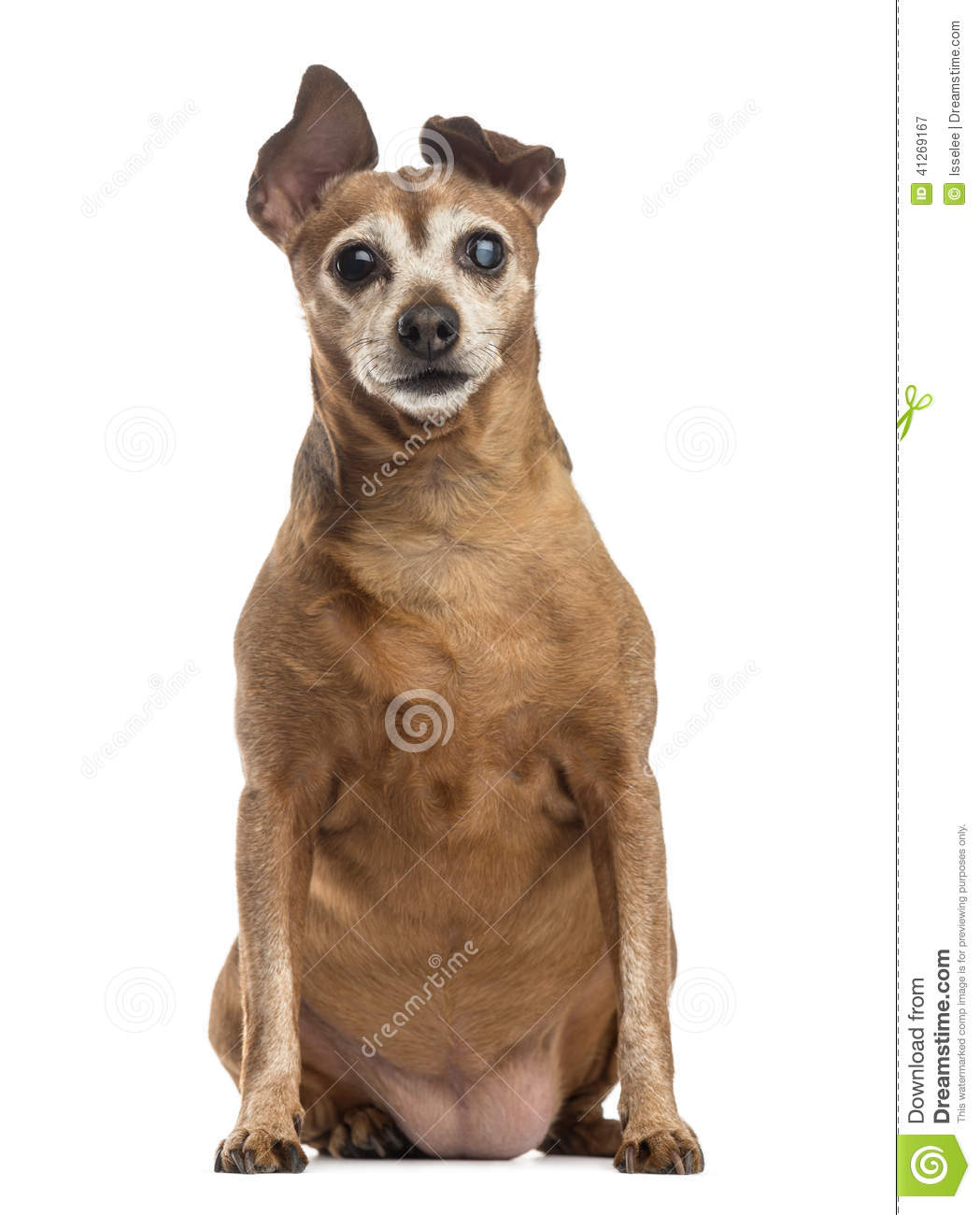 Old and fat dog (9 years old)