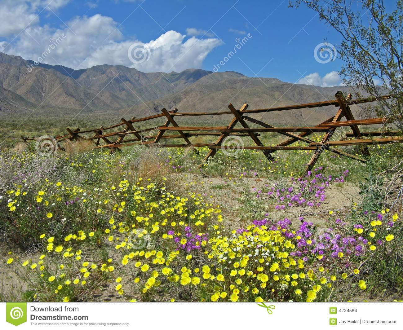Old fence, desert wildflowers