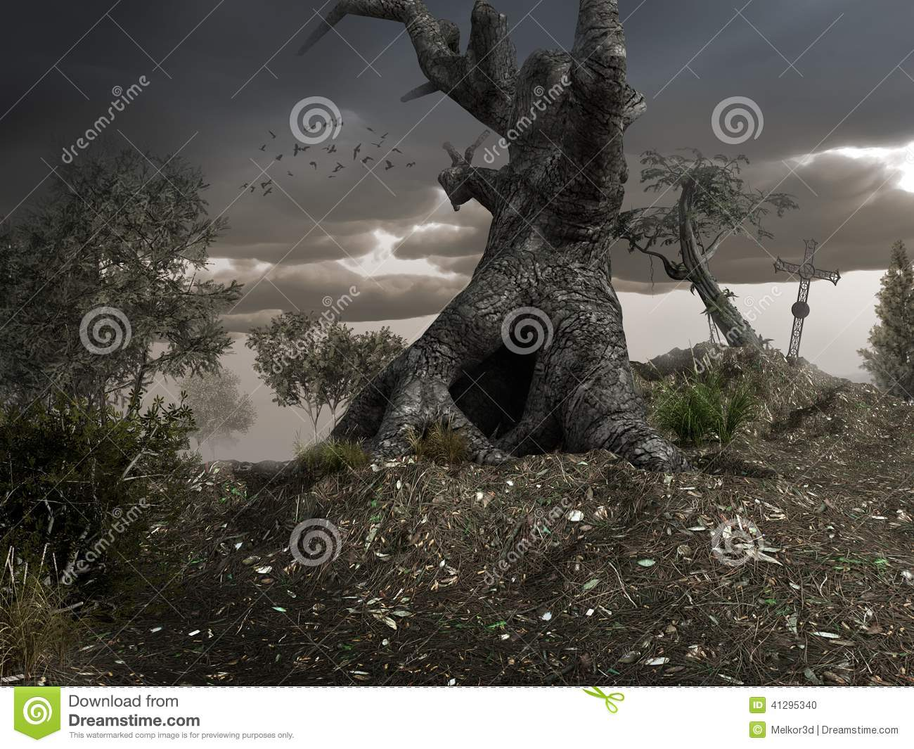 Old gnarly tree