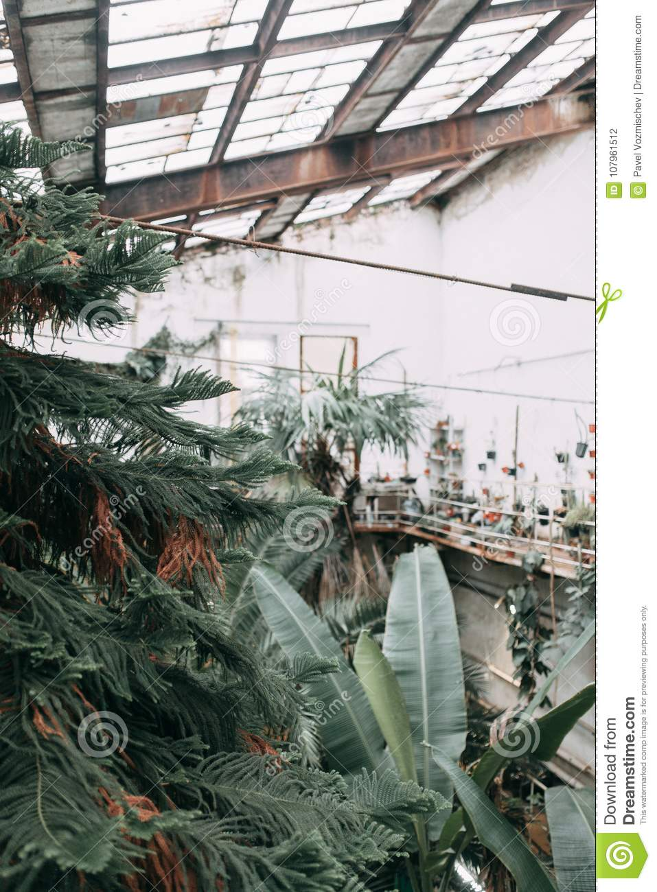 Prime Old Greenhouse In European Style Stock Photo Image Of Home Interior And Landscaping Ponolsignezvosmurscom
