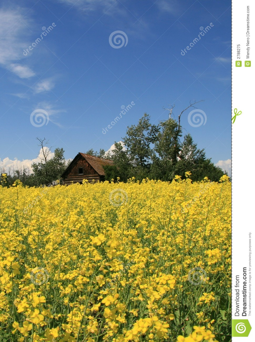 Old House in Canola Field