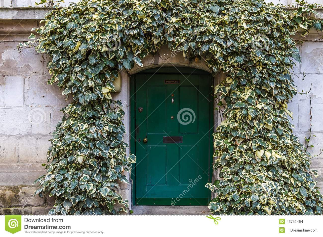 Old ivy wall with small green door in Westminster London & Old Ivy Wall With Small Green Door In Westminster London Stock ... Pezcame.Com