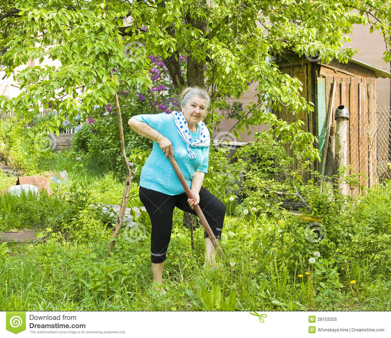 Old Lady In Garden Royalty Free Stock Photo Image 28103255