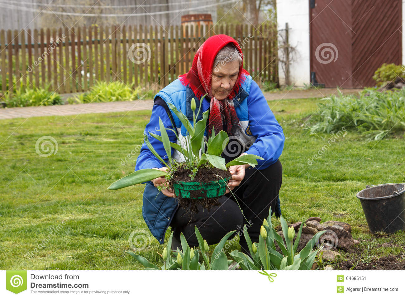 6fa0267dbcc6f Old Lady Gardening Stock Images - Download 916 Royalty Free Photos