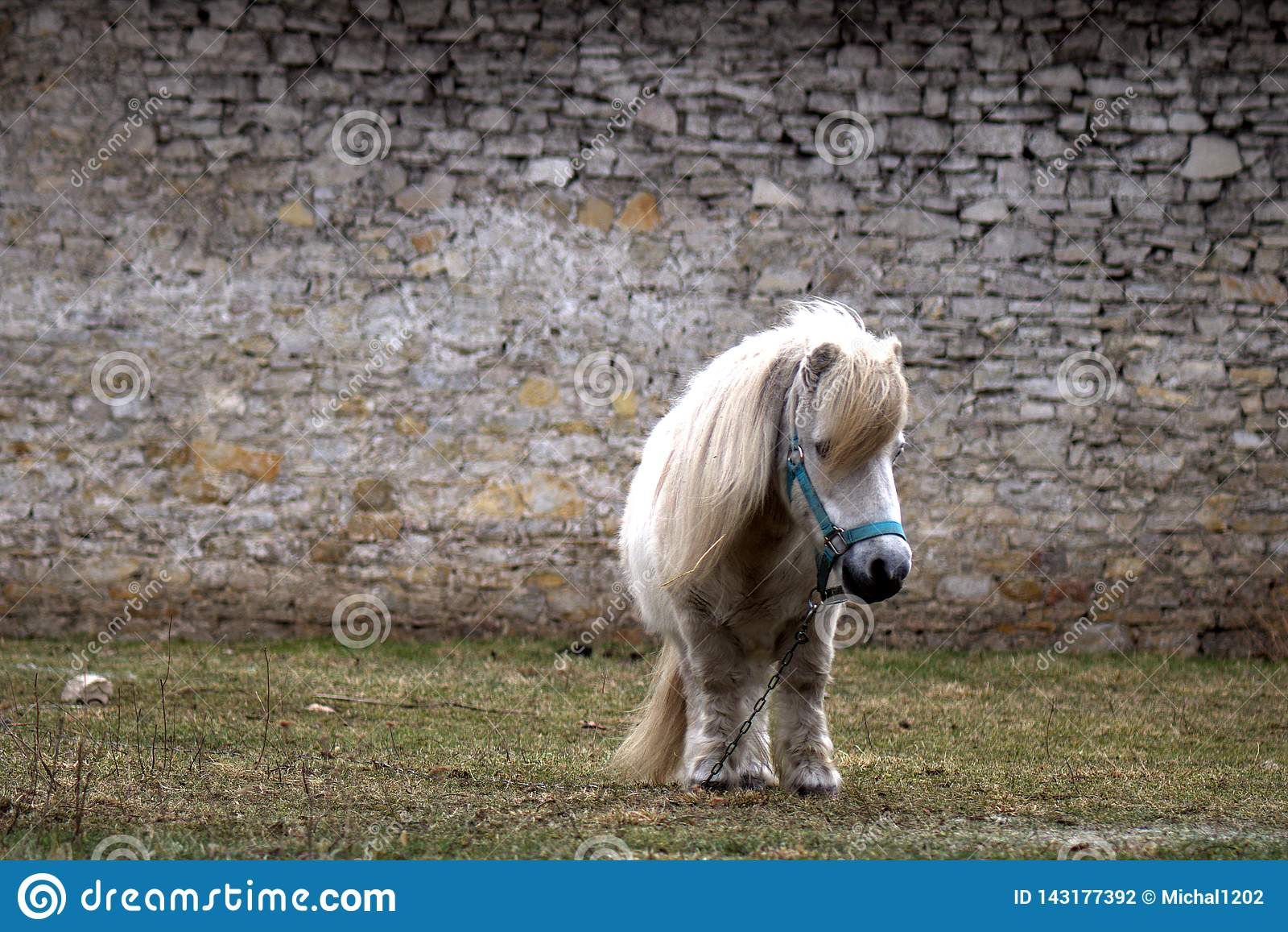 The old little pony rescued from the slaughterhouse end up in the peace of the end.