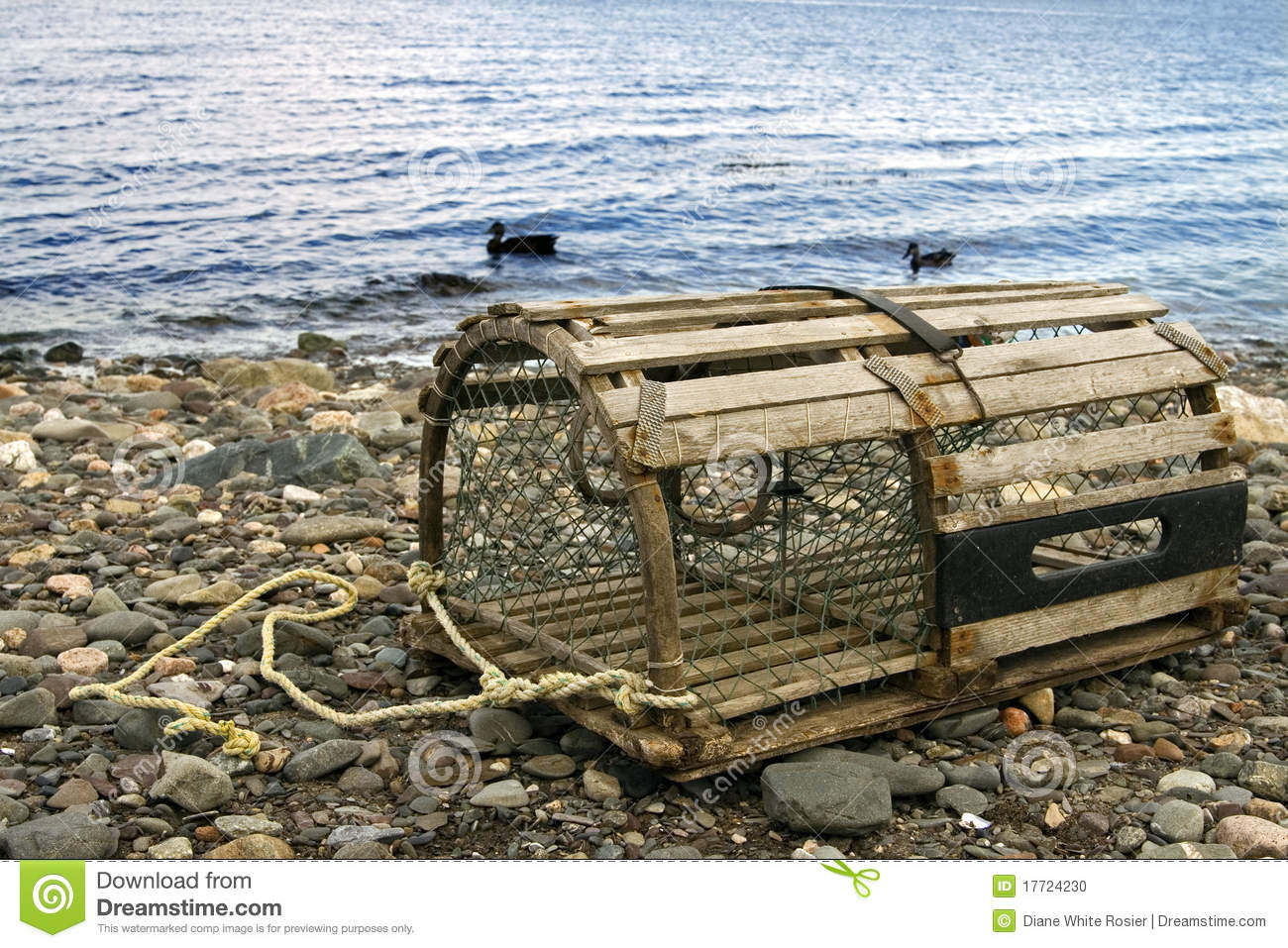 Old lobster trap stock photo. Image of fishing, water - 17724230