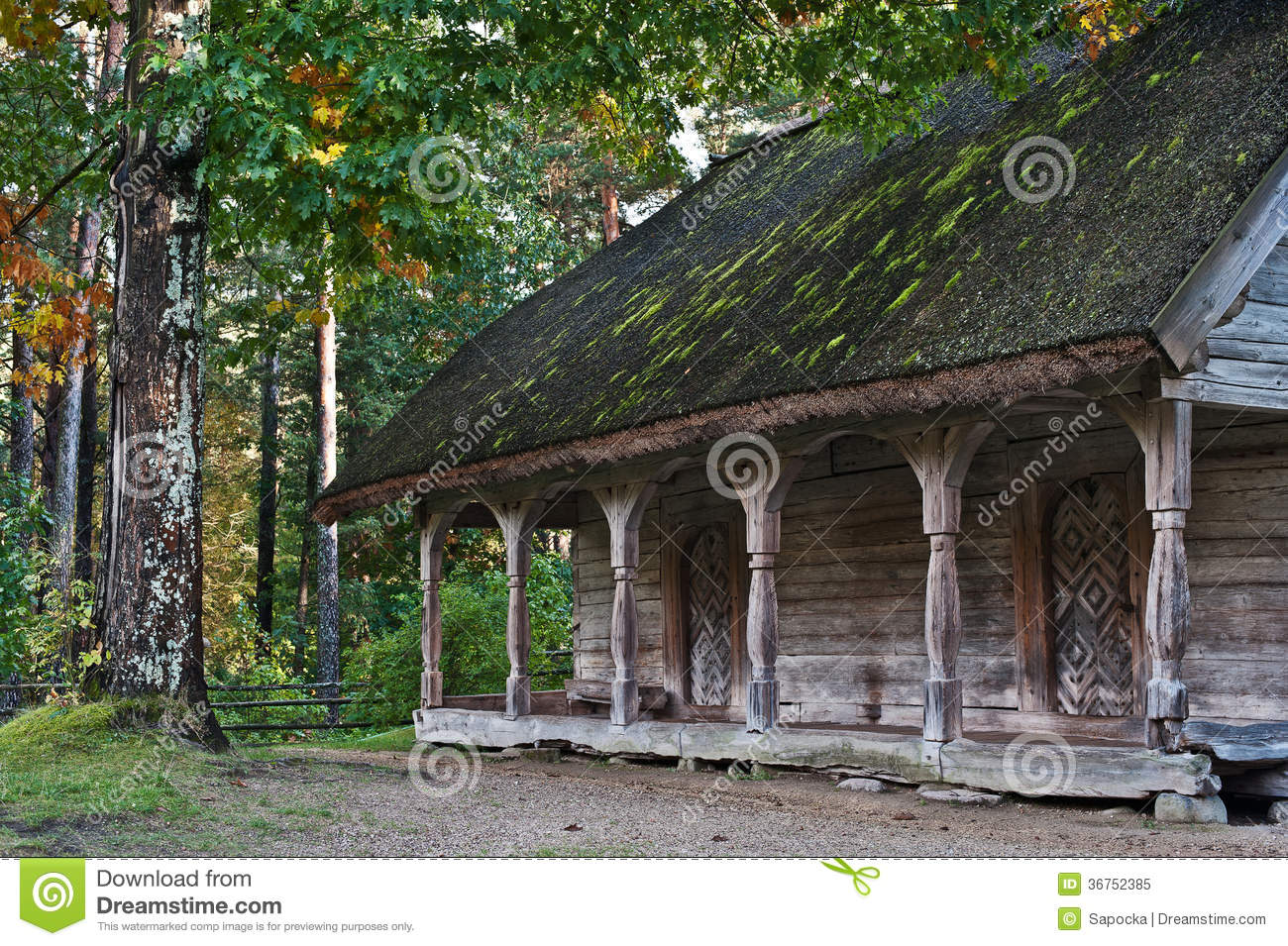 Old log cabin in the wooded forest of evergreen trees for Free log cabin