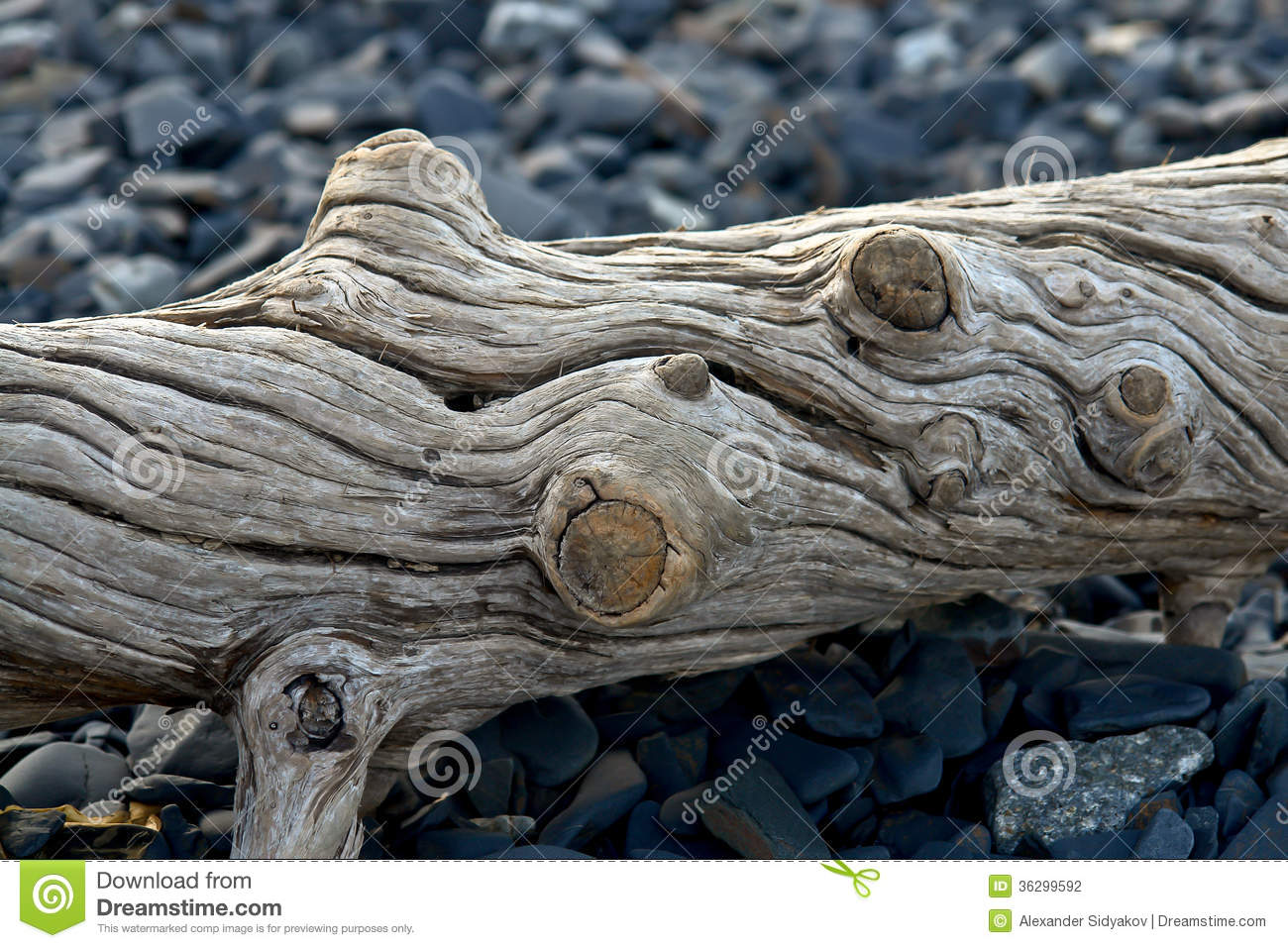 Old Log Ejected On The Sea Shore Stock Photography Image 36299592