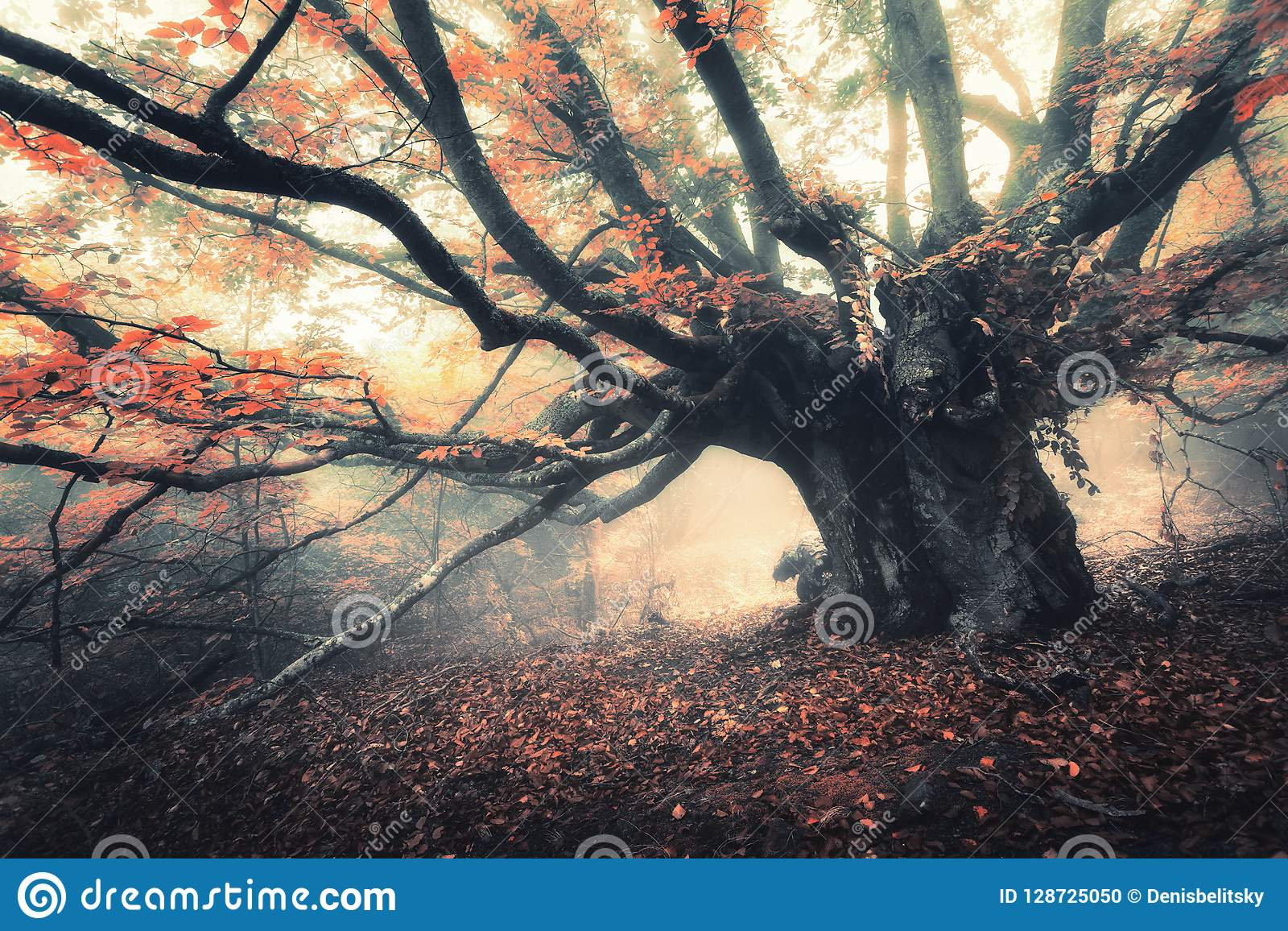 Old magical tree with big branches and orange leaves in fog