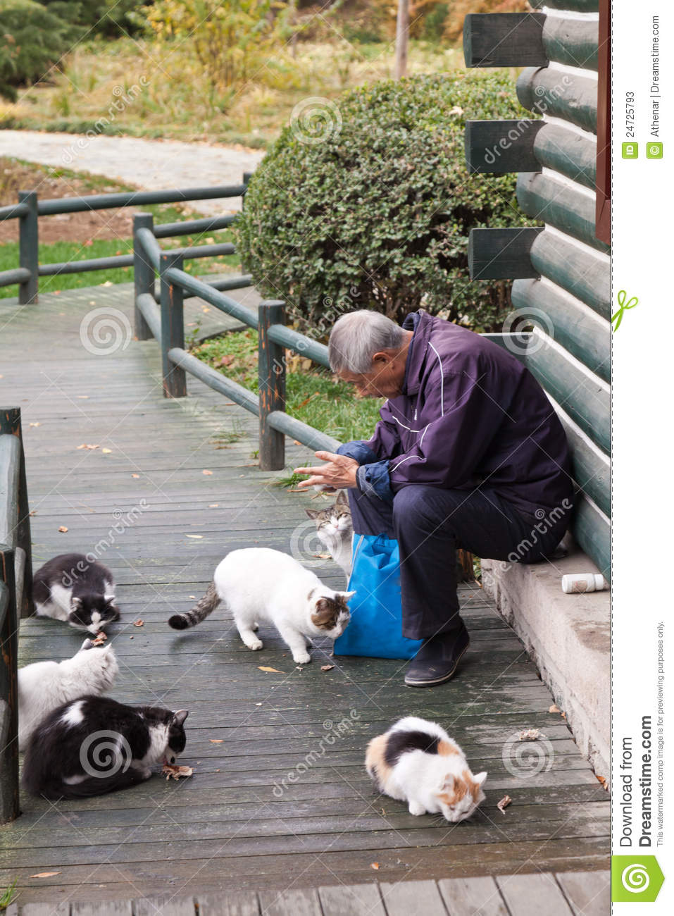 Old Man Feeding The Stray Cats In The Park Editorial Stock