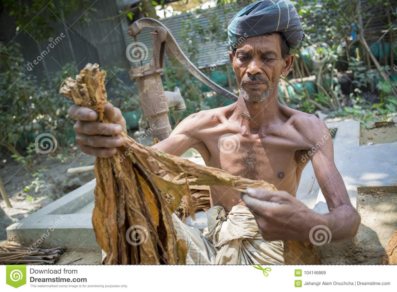Download An Old Man Tobacco Worker Processing Bunch Of Tobaccos In Dhaka, Manikganj, Bangladesh. Editorial Stock Image - Image of agriculture, alam: 104146869
