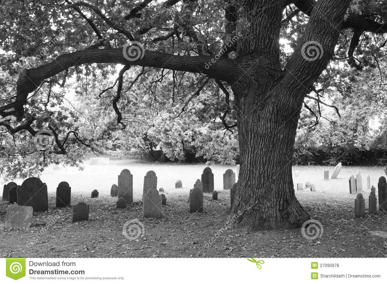 Old oak and headstones