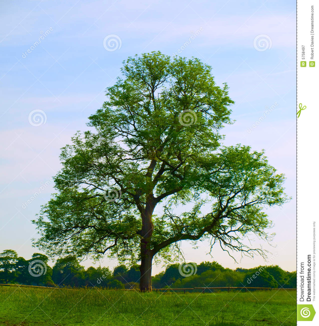 Old Oak Tree In Beautiful Green Field Royalty Free Stock Photography ...