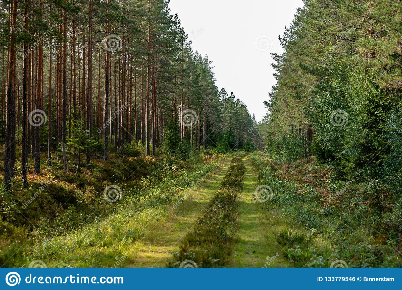 Old overgrown road in a forest