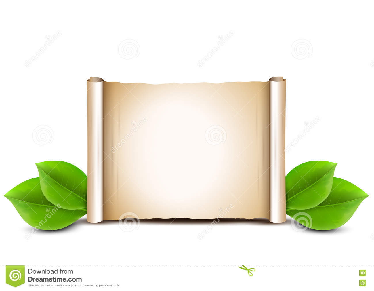 old paper scroll and green leaves on white background stock vector