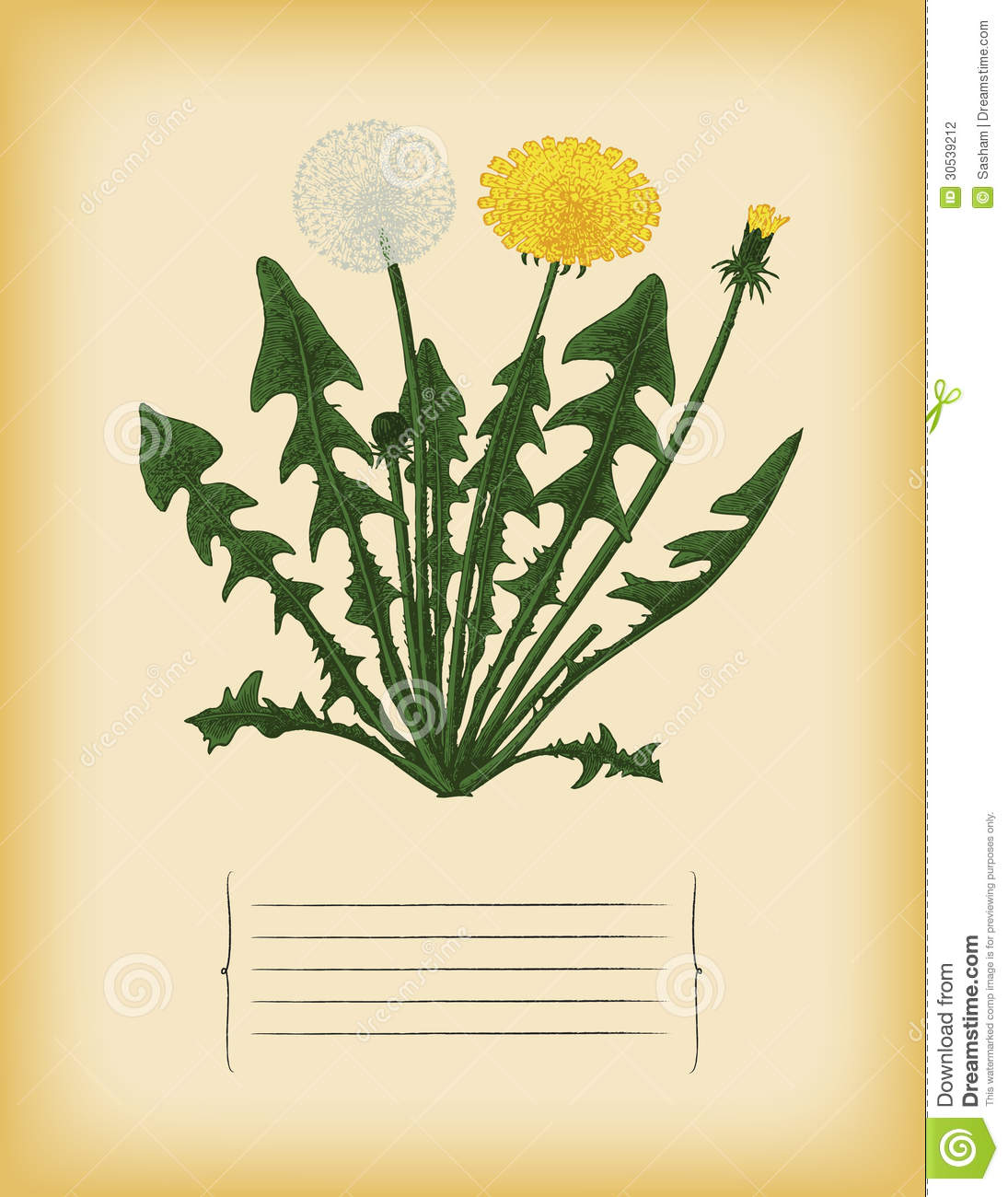 old paper template with dandelion flower vector stock vector