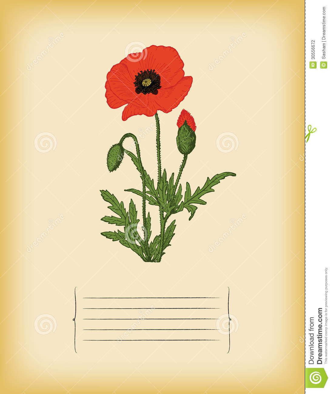 old paper template with red poppy flower vector stock vector
