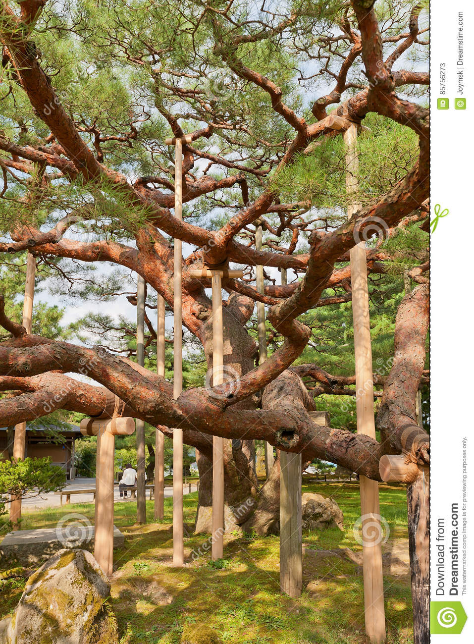 Old pine tree in kenrokuen garden of kanazawa japan stock for Jardin kenrokuen