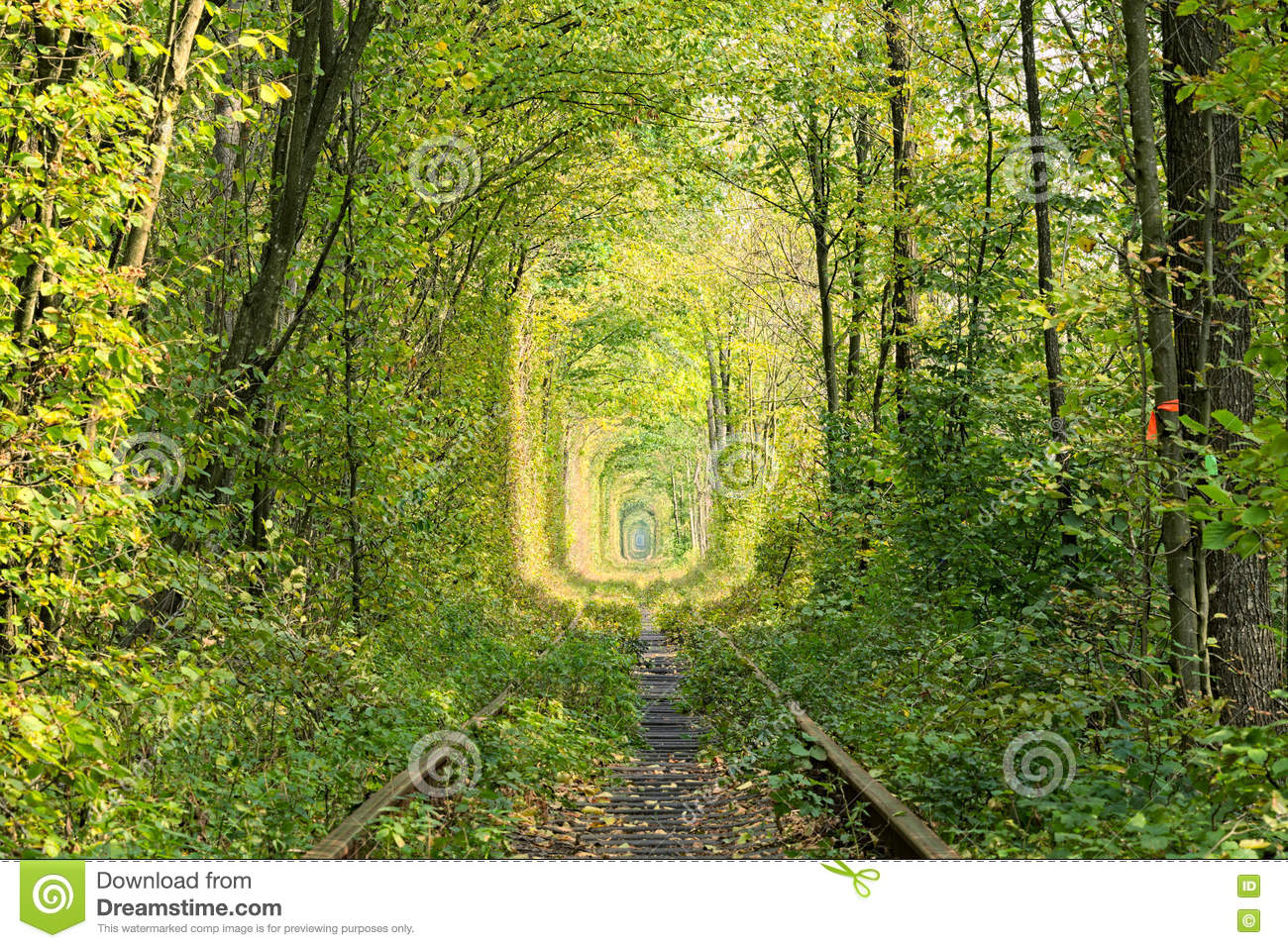Old railway line. Nature with the help of trees has created a unique tunnel. Tunnel of love - wonderful place created by nature