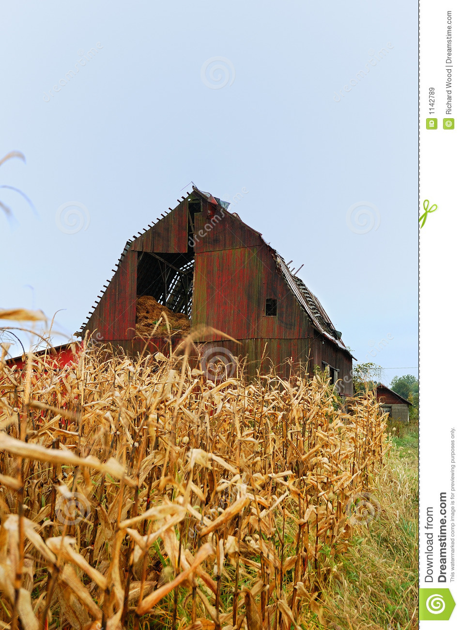 Old Red Barn With Corn Stalks Stock Image Image 1142789