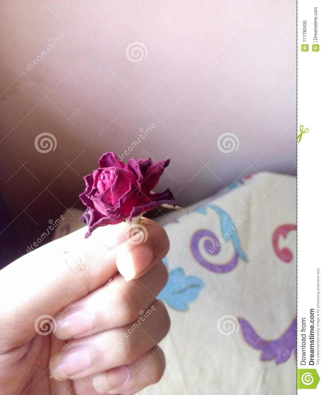 An Old Reserved Rose