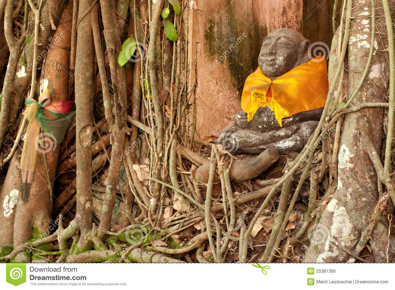 Old root tree around monk statue in Thai church.