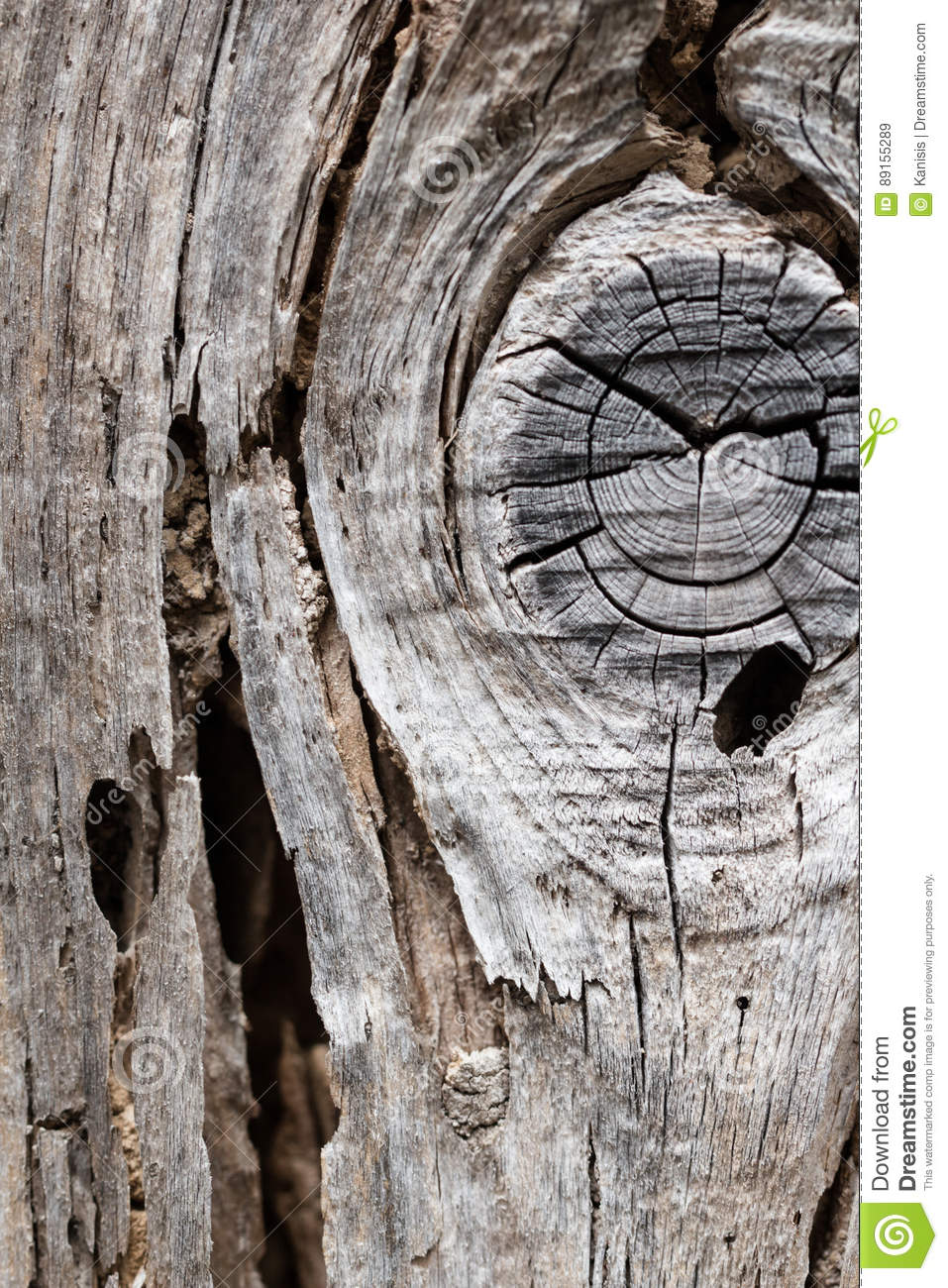 Old rustic dry decay wood board full of wormholes made by woodwo