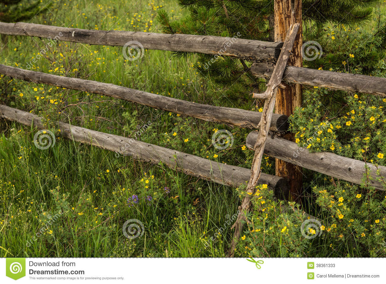 Old rustic wood fence and wildflowers in colorado stock photos ...