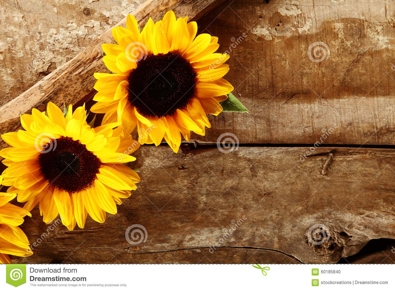background with sunflowers daisies cornflowers and ears
