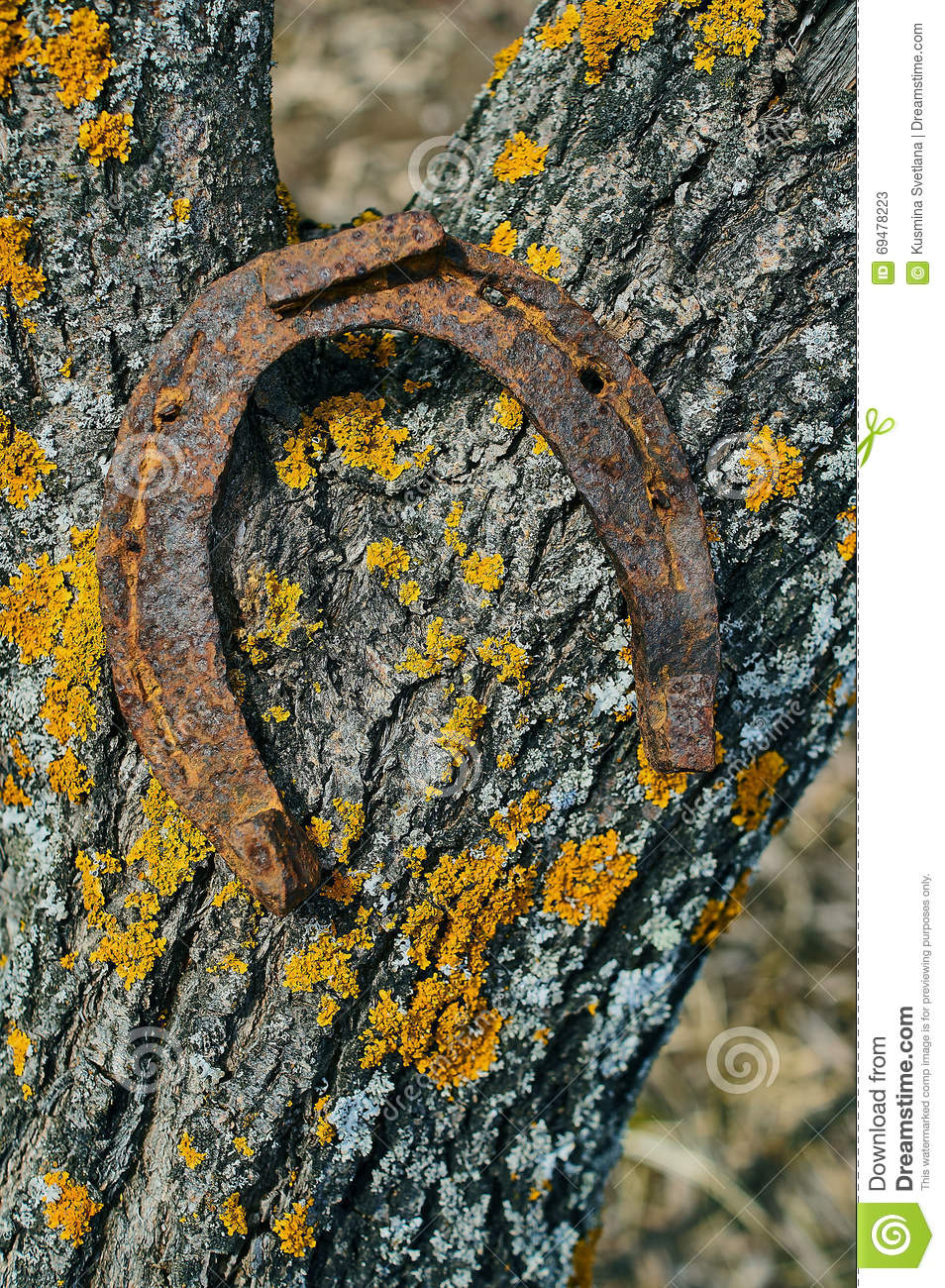 Old rusty horseshoe stock photo image 69478223 for Where to buy used horseshoes