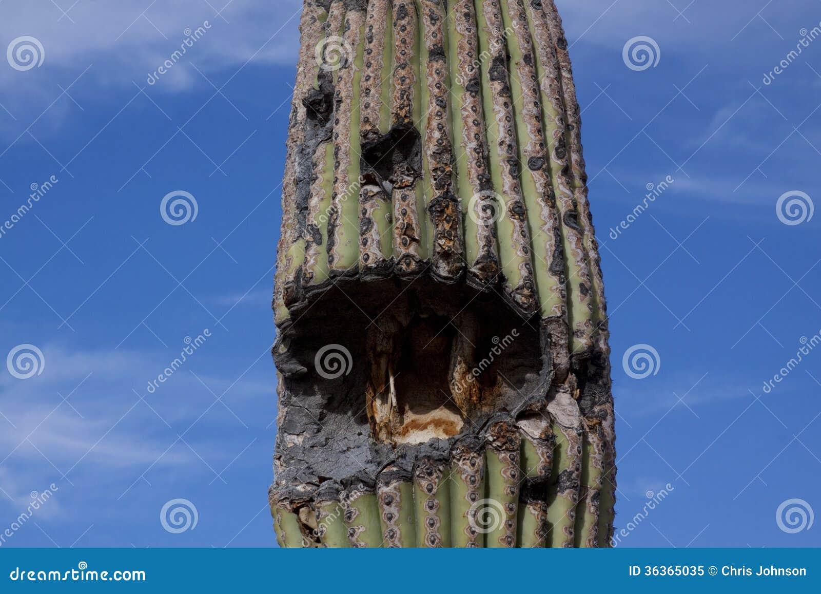 romantic places cactus clouds - photo #18