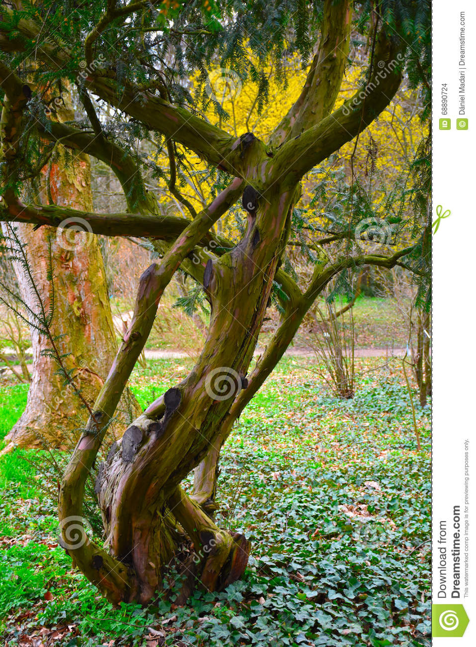 Old, Sick Pine In Colorful Environment Stock Photo - Image of nice ...