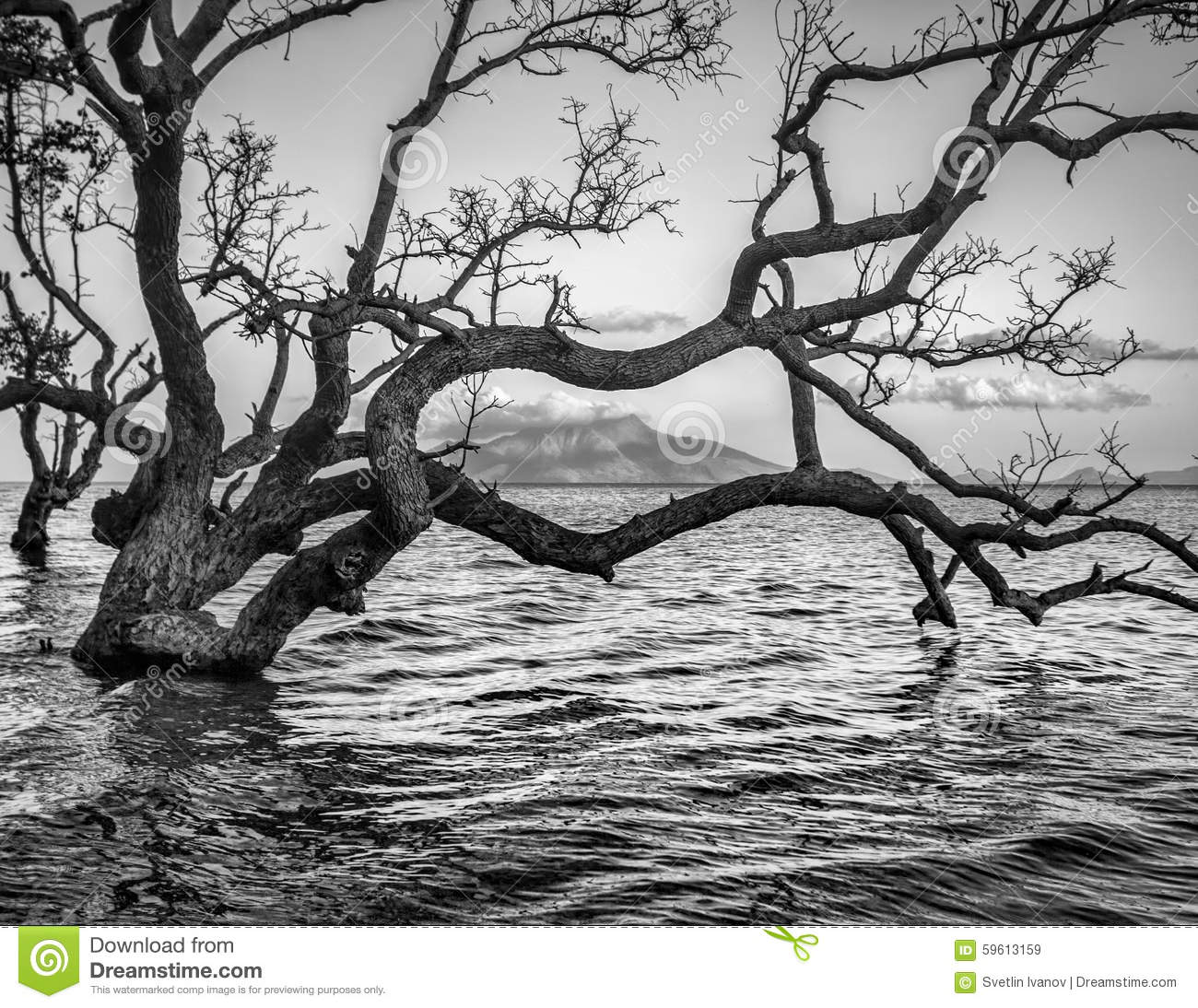 Maumere Indonesia  city images : Spooky seascape with old tree on Maumere,Indonesia.