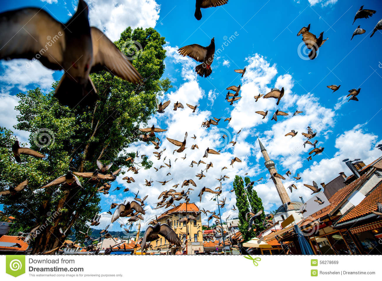 Download Old Square With Flying Pigeons In Sarajevo Stock Image - Image of travel, balkan: 56278669